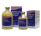 noroclav_injectavel